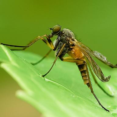 Piqûres d'insectes
