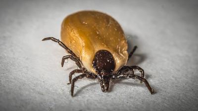 Tout ce que vous devez savoir pour échapper à la maladie de Lyme.