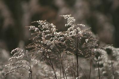 Les Maux de l'hiver